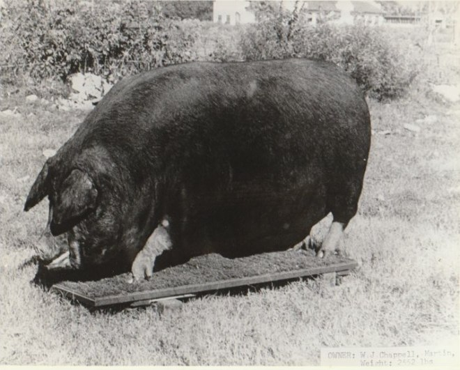 big bill 2550 lb. martin tn 1938